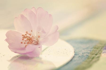 flower-596508_1280